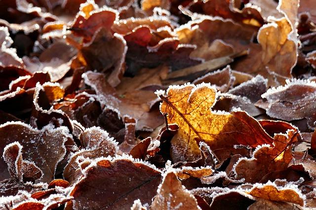 leaves-4730372_640